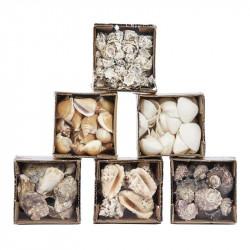Mixade snäckskal från stranden skalle, riktiga skal