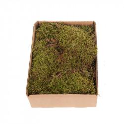 Mossa på bricka, 150 g, äkta torkad mossa