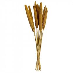 Torkad äkta kaveldun, gul, 70 cm