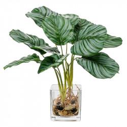 Kalatea i glaskruka, 32 cm, konstgjord växt