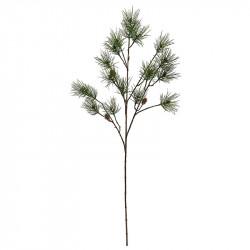 Tall-grangren, 110 cm med kottar
