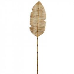 Torkade vattenhyacintblad på stjälk