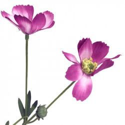 Rosenskära-kvist, 69 cm Rosa, Konstgjord blomma
