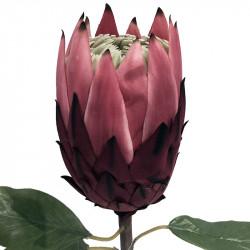 Protea blomma, 67 cm, Bordeaux/rosa, konstgjord blomma