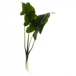 Grön växt m. rot/stora blad, 3 olika designer, konstgjordvä xt