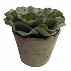Echeveria i kruka, 14 cm, konstgjord Suckulent