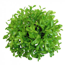 Buxbom-boll, utomhus, UV-skyddad Ø 13 cm, Konstgjord växt