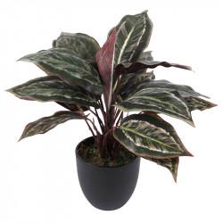 Kalatea-växt, 43 cm, konstgjord växt