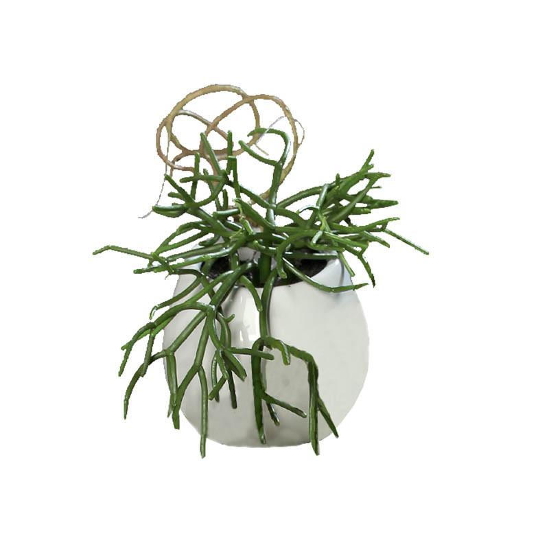 Hängande suckulent 16 cm i keramikkruka m upphängningkonstg