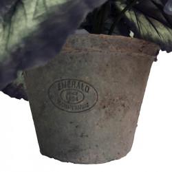 Kungsbegonia i kruka Svart/Grön 23cm, konstgjord växt