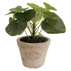 Pilea - Elefantöra-växt i kruka, 13 cm, konstgjord växt