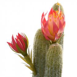 Fingerkaktus i kruka med rosa blommor, konstgjord växt