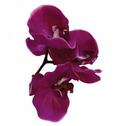 Orkidé-blomhuvud, konstgjord blomma