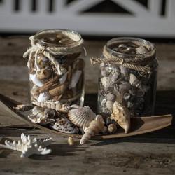 Snäckskal och natur-dekoration i glas med ljust rep