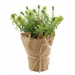 Kryddört - Timjan i pappersinslagen kruka, konstgjord växt