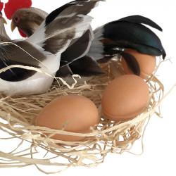 2 höns på bast med 3 ägg, vit-brun