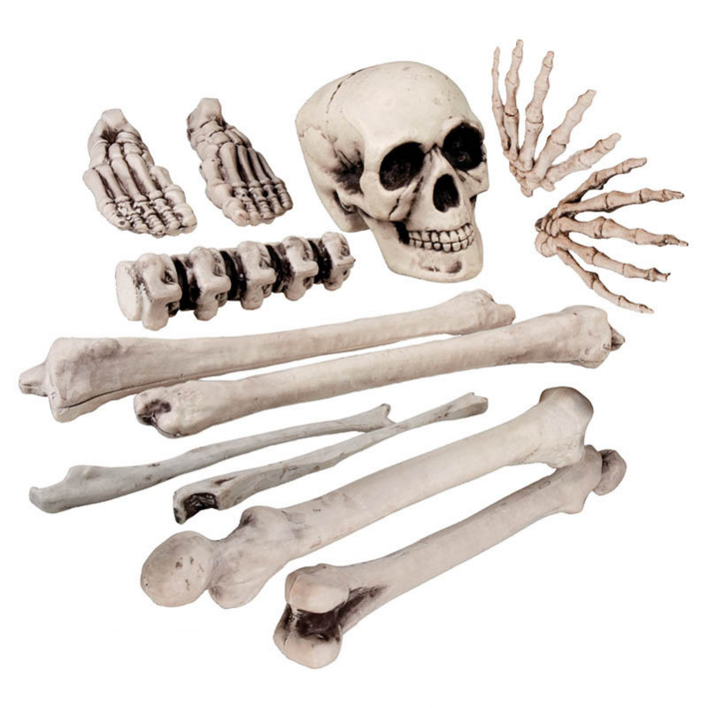 Skelett-set med 12 delar