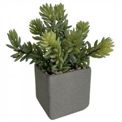 Suckulent i fyrkantig, grå kruka, H: 19 cm, konstgjord växt