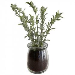Kyrddört Malört, 20 cm i glaskruka, konstgjord växt