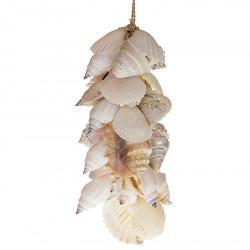 Snäckskalsranka, vit, 40 cm