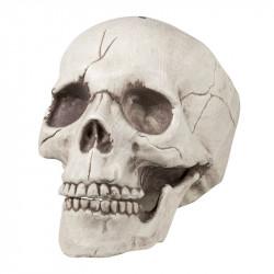 Kranie med rörlig käke 16x14x21cm