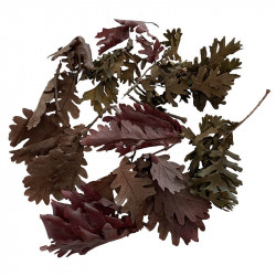 Äkta ekblad, blandade naturfärger, 50g