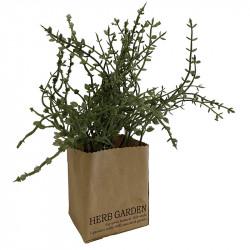 Timjan i papperslåda, 23cm, konstgjord växt