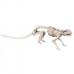 Råttskelett, L35cm
