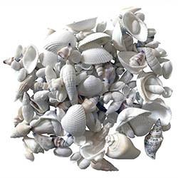 Snäckor i vita färger, 500g