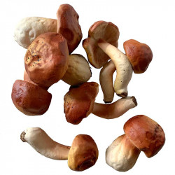 Svamp, orange/brun, 8-9,5cm, konstgjord mat