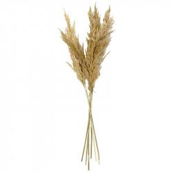 Pampasgräs i bunt, äkta, 6 st, 65-75cm, äkta sköna gräs