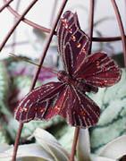 Konstgjorda Fjärilar | Som dekoration eller utsmyckning ⇒ Köp här!
