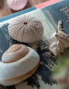Maritimt tema | Pynt till utställning eller fest