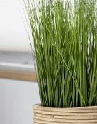 Konstgräs, sten & svamp