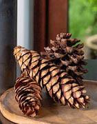Dekorativa kottar, svamp och nötter
