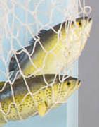 konstgjorda fiskar, skaldjur och isbitar i plast ⇒ Köp online här!